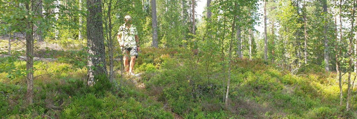 wandelen in zomer bos